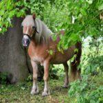 dejlig hest