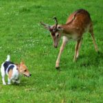 bambi og hund