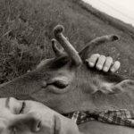 helle og bambi