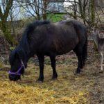 pony og bambi
